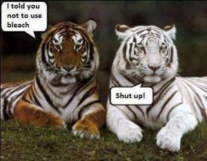 tigerchatter