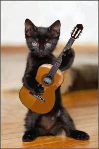 blackcatguitar