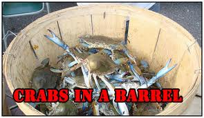 crabsinthebarrel